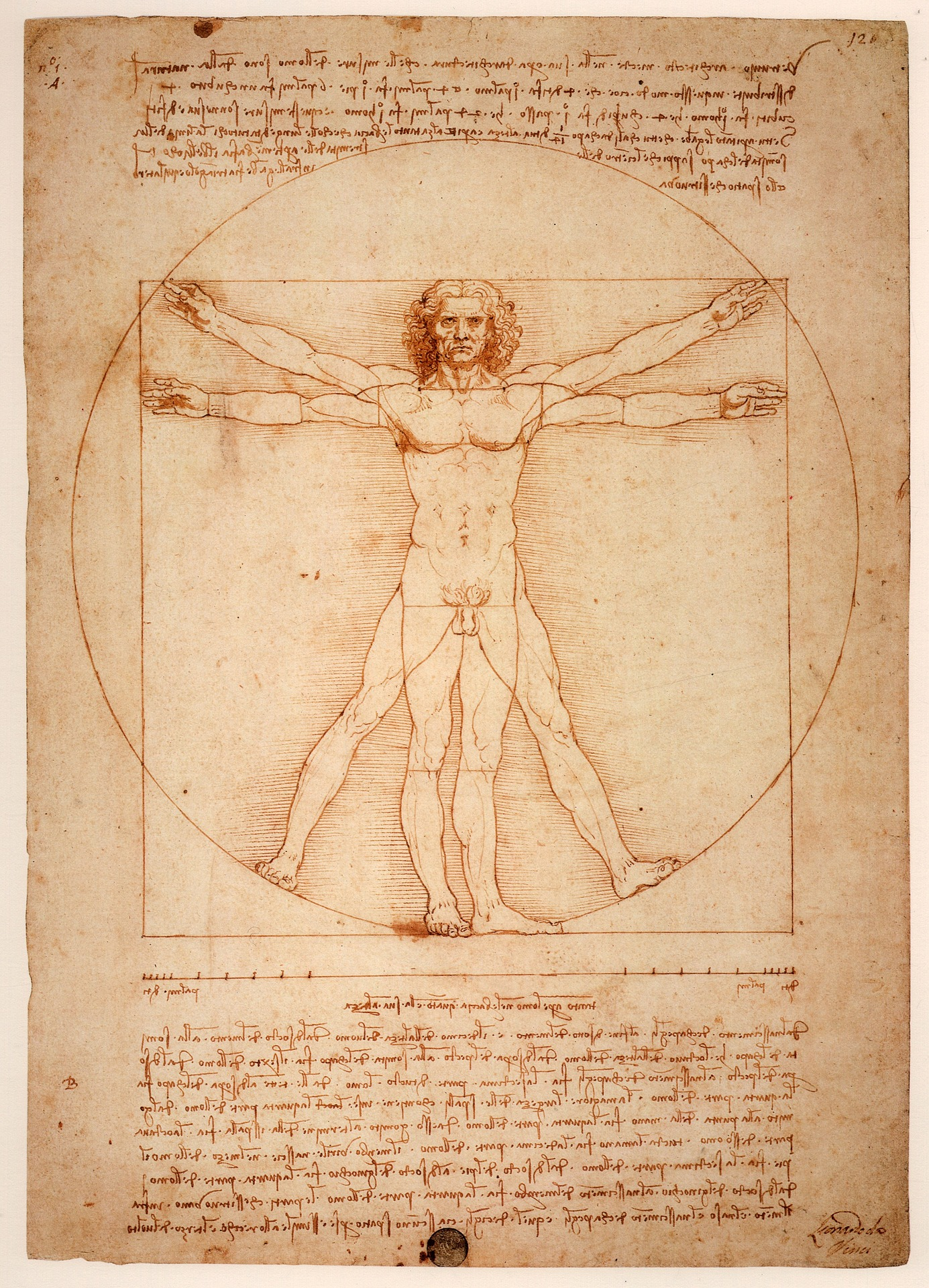 Da Vinci's Historical Image of the Human Body